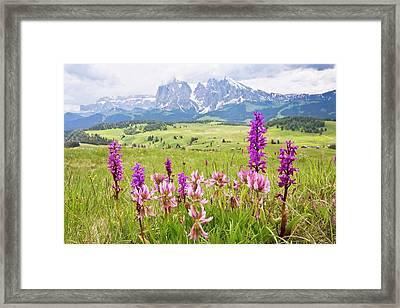 Flowery Alpine Meadow Framed Print by Bob Gibbons