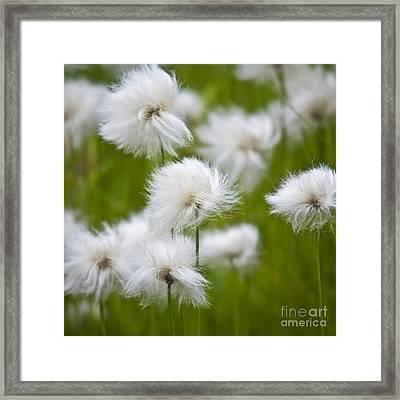 Flowery Cotton Framed Print by Heiko Koehrer-Wagner