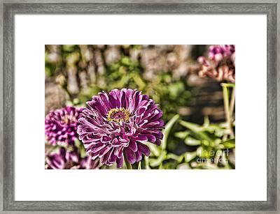 Flowery Sketches Framed Print