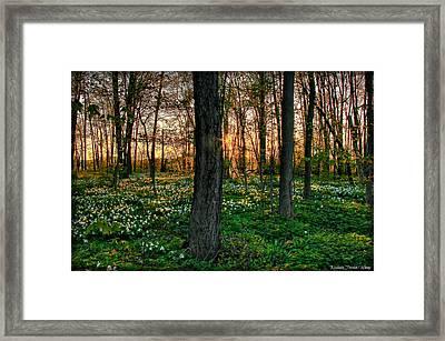 Flowery Sunset Framed Print