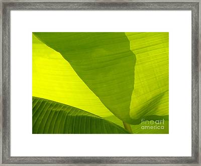 Flowing Banana Leaf Framed Print by Anna Lisa Yoder
