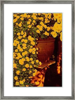 Flowing Beauty Framed Print by Sonali Gangane
