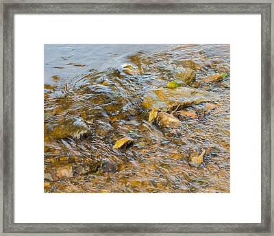 Flowing Leaves Framed Print by Neil Todd