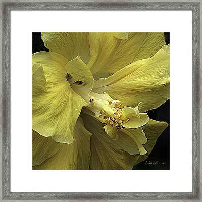 Flowing Petals Of The Chinese Hibiscus Framed Print by Julie Palencia