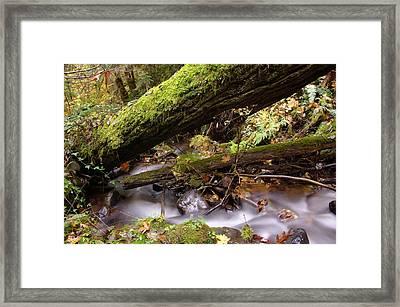 Flowing Under A Log Framed Print by Jeff Swan
