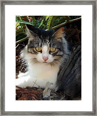 Fluffy Cat Framed Print by Pamela Walton