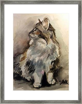 Fluffy Cat Framed Print