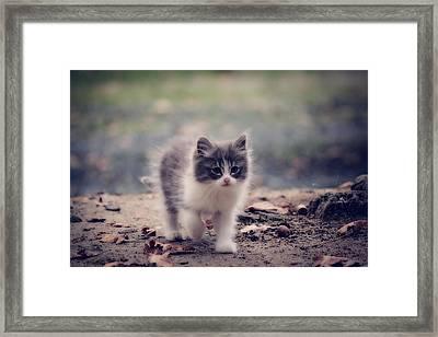 Fluffy Cuteness Framed Print