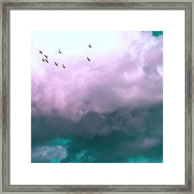 Fluffy Flight Framed Print by Courtney Haile