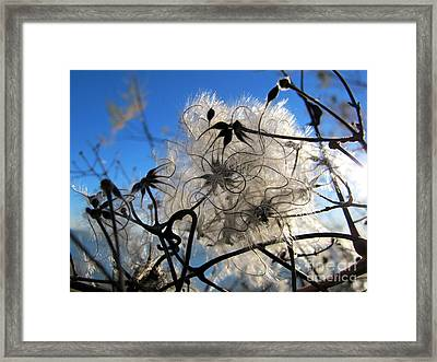 Framed Print featuring the photograph Fluffy Flower by Art Photography