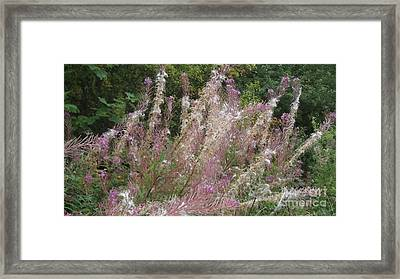 Fluffy Flowers Framed Print by John Williams