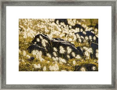 Fluffy Landscape In Bolivia Framed Print by For Ninety One Days
