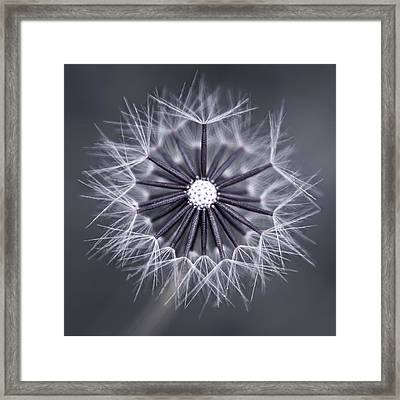 Fluffy Sun - S99b Framed Print by Variance Collections
