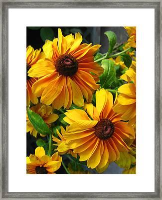 Fluffy Yellows Framed Print