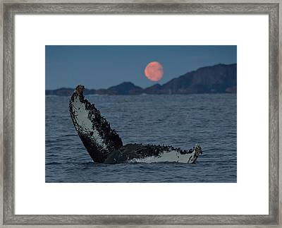Fluke Moon Framed Print by Wade Aiken