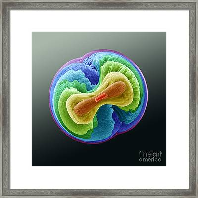 Fluorapatite Crystal Framed Print