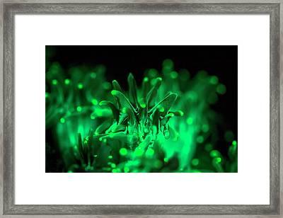Fluorescent Coral Framed Print