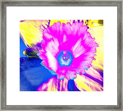 Fluorescent Daffodil  Framed Print by Shawna Rowe