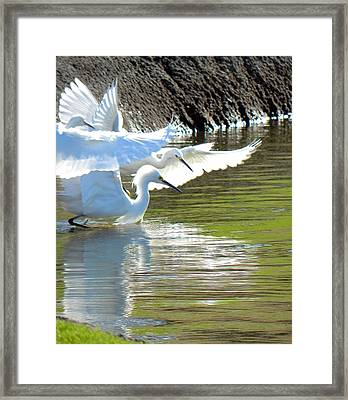 Framed Print featuring the photograph Flurry by Deb Halloran