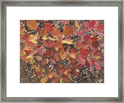 Flurry Of Colors Framed Print by James Rishel
