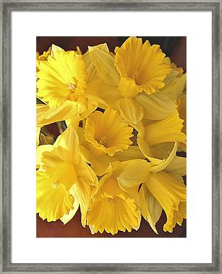 Framed Print featuring the photograph Flurry Of Daffodils by Diane Alexander