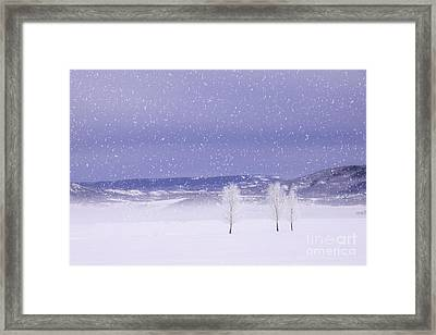 Flurry Trio Framed Print