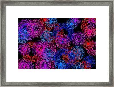 Flurxerg Framed Print