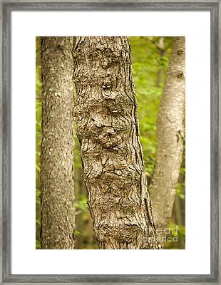 Fluted Tree Framed Print
