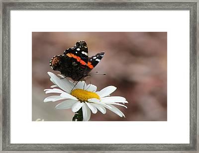 Flutter II Framed Print
