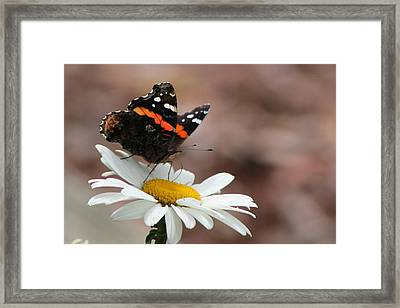 Flutter II Framed Print by Sarah Boyd