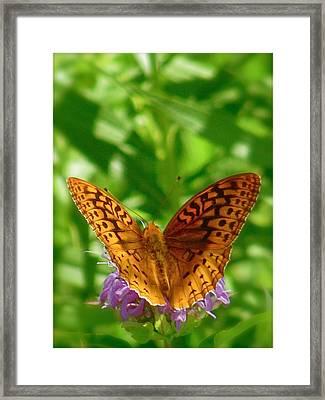 Flutterby Framed Print by Tim Good