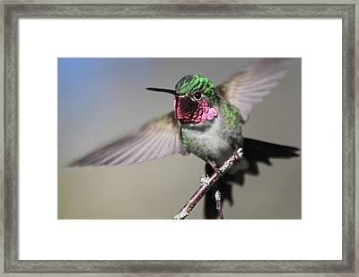 Fluttering Framed Print