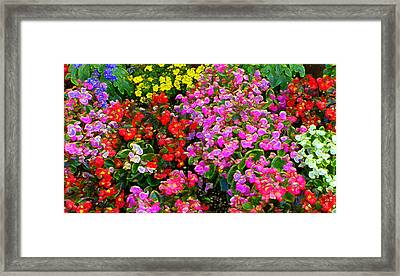 Flwrs Test 1 Framed Print