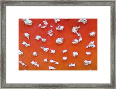 Fly Agaric Abstract Framed Print by Nigel Downer