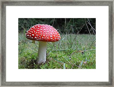 Fly Agaric In The Grass Framed Print by John Topman