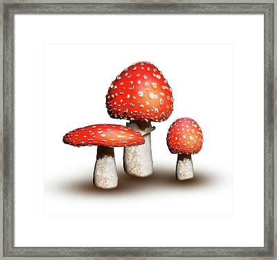 Fly Agaric Mushrooms Framed Print by Mikkel Juul Jensen