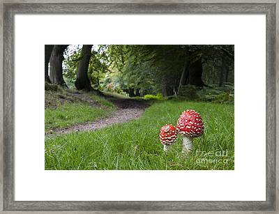 Fly Agaric Mushrooms Framed Print by Tim Gainey