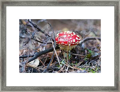 Fly Agaric Toadstool Framed Print by David Isaacson
