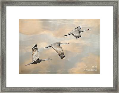 Fly Away Framed Print by Alice Cahill