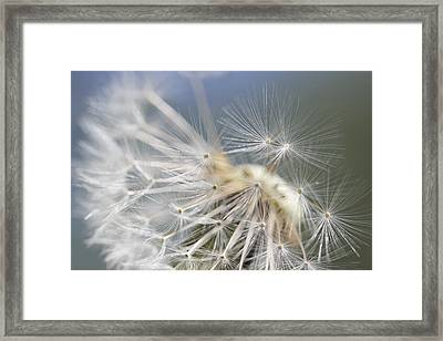 Fly Away Dandelion Seeds  Framed Print by Jennie Marie Schell