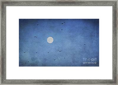 Fly Away Framed Print by Darren Fisher