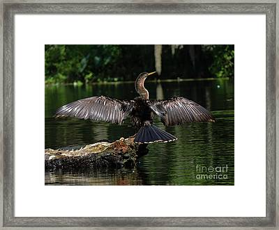 Fly Away Framed Print