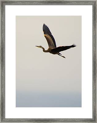 Framed Print featuring the photograph Fly Away by Erin Kohlenberg