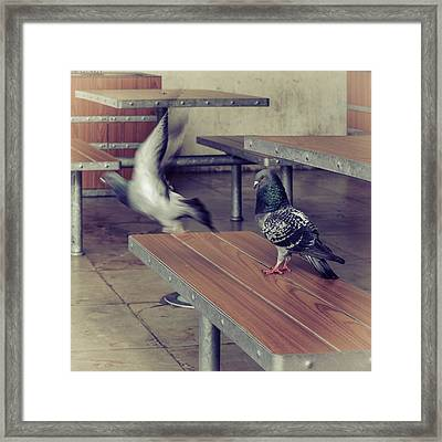 Fly Away Framed Print by Marco Oliveira
