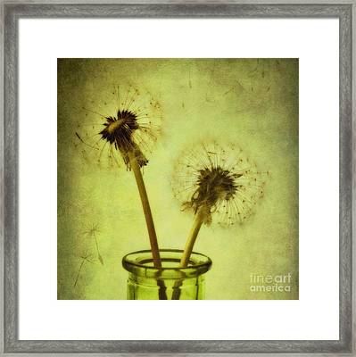 Fly Away Framed Print by Priska Wettstein