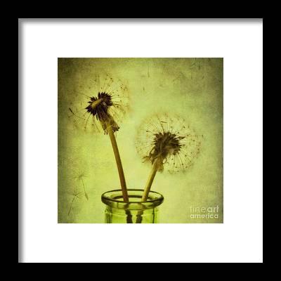 Dandelion Clocks Framed Prints
