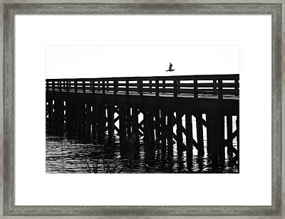 Framed Print featuring the photograph Fly Away by Sonya Lang