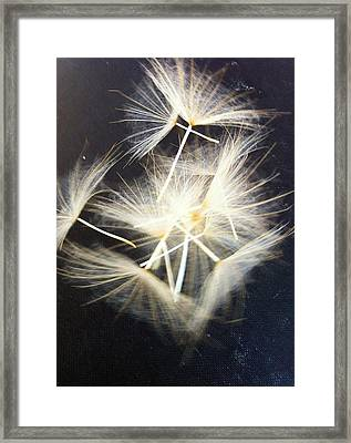 Fly Away Framed Print by Stephanie Aarons