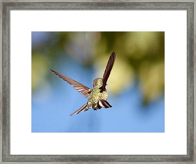 Fly Away With Me Framed Print by Nathan Rupert