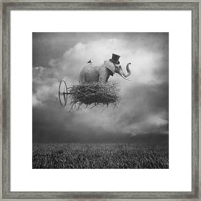 Fly Framed Print by Beata Bieniak